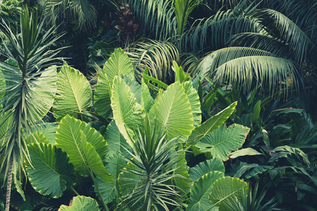 Photo for palm trees, jungle  , tropical plants background - Royalty Free Image
