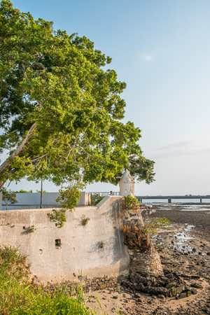Photo for Big tree at historic coast wall in Casco Viejo in Panama City - historical architecture - Royalty Free Image