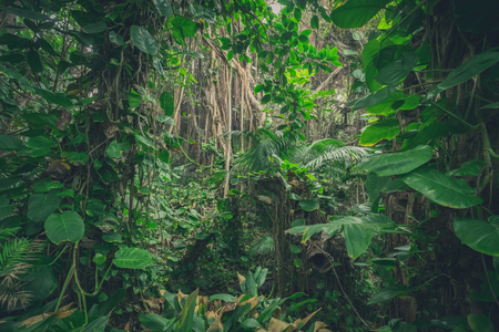 Photo for inside jungle , in rainforest / tropical forest landscape - Royalty Free Image