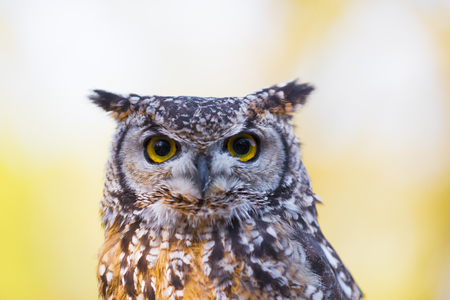 Photo for owl in an animal park in germany - Royalty Free Image