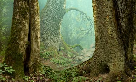 Photo pour Mysterious fantasy forest landscape - image libre de droit