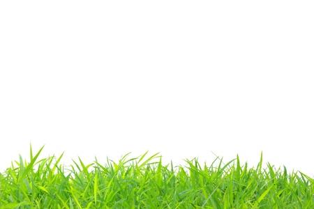 Photo pour frame of grass at below edge - image libre de droit