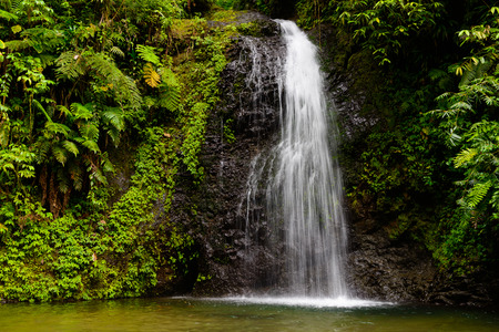 Photo for waterfall the rainforest - Royalty Free Image