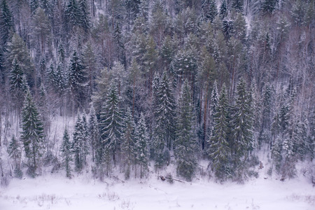 Photo for background, landscape - snowy winter forest, taiga, top view - Royalty Free Image