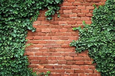 Foto de Old brick wall covered in ivy - Imagen libre de derechos