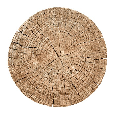Photo for Cross section of tree trunk showing growth rings on white background - Royalty Free Image