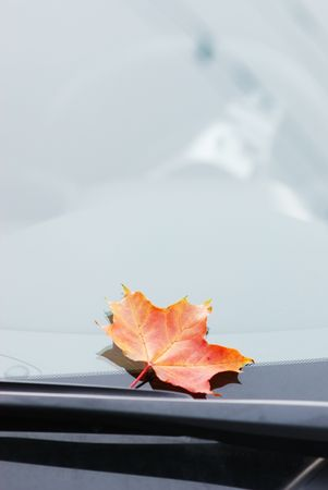 Autumn maple leaf on car window