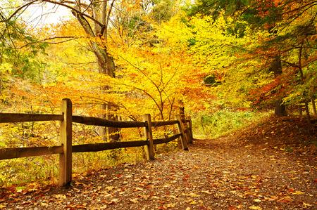 Foto de Autumn scene landscape at Letchworth State Park - Imagen libre de derechos