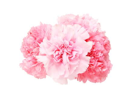 Photo for Bouquet of carnation - Royalty Free Image