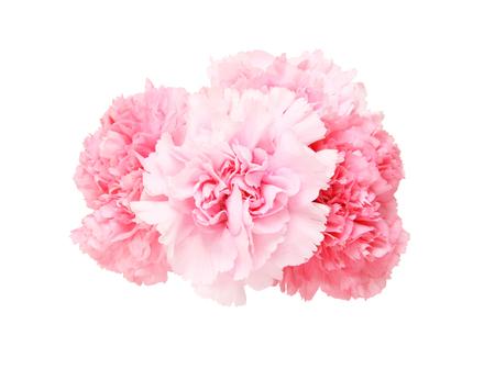 Photo pour Bouquet of carnation - image libre de droit