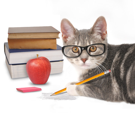 Foto de A gray cat is holding a pencil with a scribble and books on a white isolated background for a training or humor concept. - Imagen libre de derechos