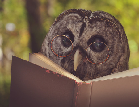 Photo pour An owl animal with glasses is reading a book in the woods for an eduication or school concept. - image libre de droit