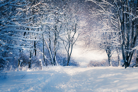Photo pour Winter landscape in snow forest. Alley in snowy forest - image libre de droit