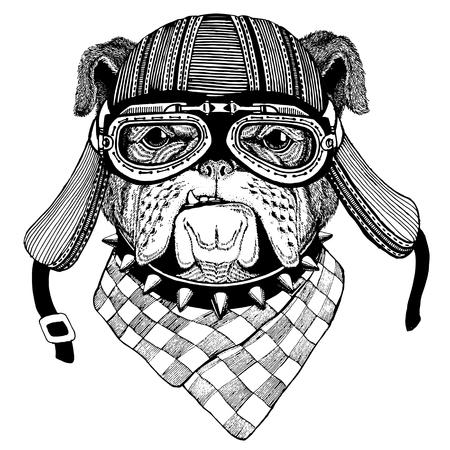Photo for Bulldog Wild animal wearing biker motorcycle aviator fly club helmet Illustration for tattoo, emblem, badge, logo, patch - Royalty Free Image