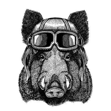 Illustrazione per Animal wearing aviator helmet with glasses. Vector picture. Aper, boar, hog, wild boaraper, boar, hog, wild boar Hand drawn image for t-shirt, tattoo, emblem, badge, logo, patch - Immagini Royalty Free