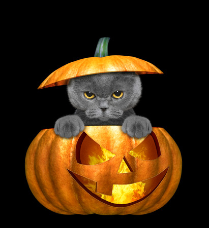 Photo for halloween pumpkin with cute cat - isolated on black - Royalty Free Image