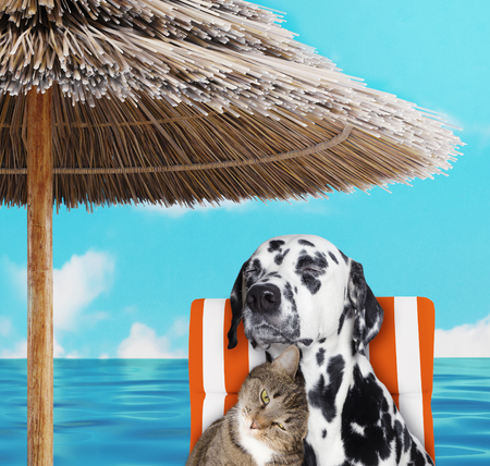 Foto de Cute dalmatian dog and cat resting and relaxing on the beach chair under umbrella. 3d render - Imagen libre de derechos