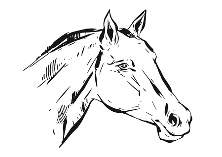 Illustration pour Hand drawn vector lined ink graphic horse head illustration isolated on white background - image libre de droit