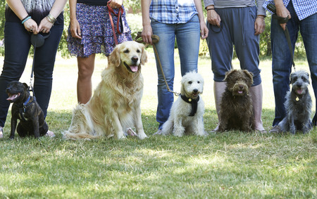 Foto de Group Of Dogs With Owners At Obedience Class - Imagen libre de derechos