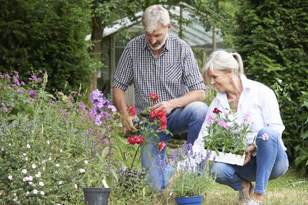 Photo pour Mature Couple Planting Out Plants In Garden - image libre de droit