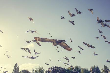 Foto de flock of pigeons flying in the air away from viewer - Imagen libre de derechos