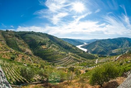 Photo pour Terraced vineyards in Douro Valley, Alto Douro Wine Region in northern Portugal - image libre de droit