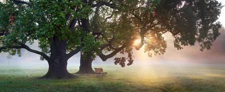 Photo pour panorama of bench under old oak tree at misty autumn morning with sunbeams shining thru leaves - image libre de droit