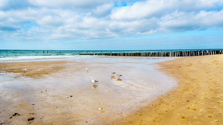 Foto per Beach at the North Sea and Westerschelde near the harbor city of Vlissingen in Zeeland Province, the Netherlands - Immagine Royalty Free