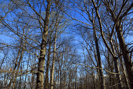 Photo for Blue sky in woodland - Royalty Free Image