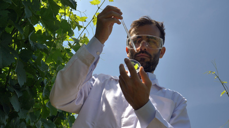 Photo pour A specialist in plants, checks the grape fields, takes a sample of leaf moisture, a background of greenery. Concept: ecology, wine, bio product, inspection, water, natural products, professional. - image libre de droit