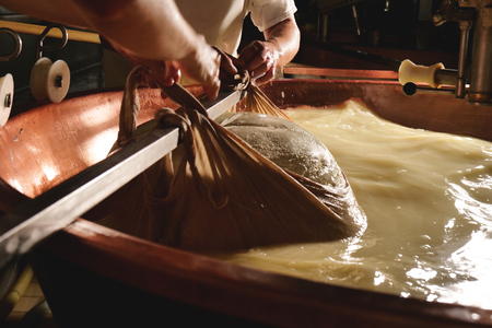 Photo pour A cheesemaker prepares a form of Parmesan cheese using fresh and organic milk. The processing is done following the ancient Italian tradition. - image libre de droit