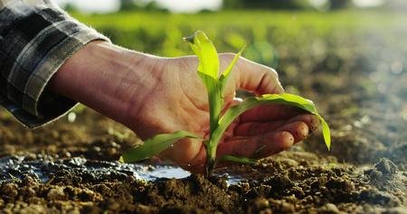 Foto de a young beautiful hand watering a plant in a romantic natural and magical atmosphere - Imagen libre de derechos