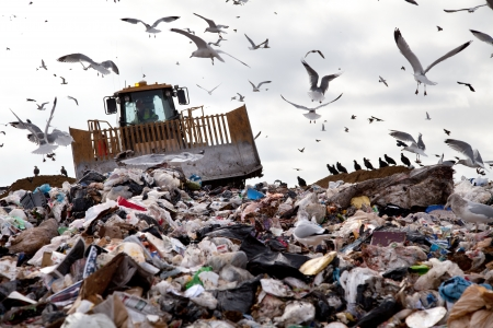 Foto de Truck working in landfill with birds in the sky - Imagen libre de derechos