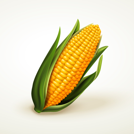 Illustration pour fresh delicious corn, can be used as design elements, isolated white background 3d illustration - image libre de droit