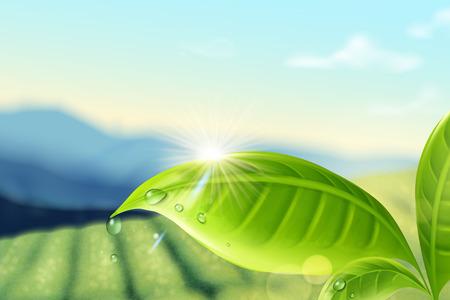 Illustration for Green tea plantation background in 3d illustration for design uses - Royalty Free Image