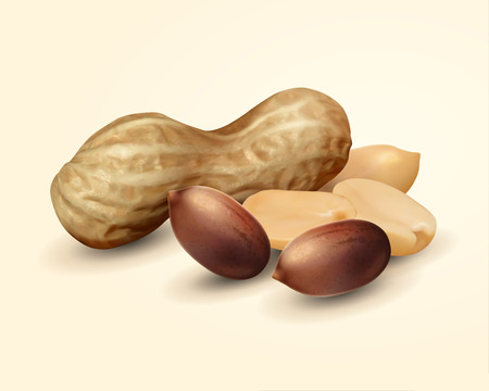 Illustration for Closeup look at peanut in shell, 3d illustration food ingredient design element - Royalty Free Image