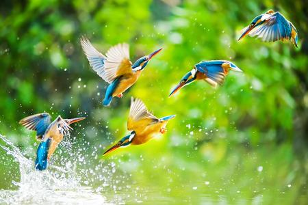 Foto de Kingfisher - Imagen libre de derechos