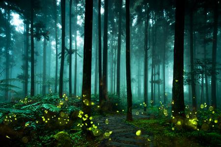 Foto de firefly - Imagen libre de derechos