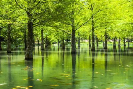 Photo pour Landscape of forest at Hualien, Taiwan, Asia - image libre de droit