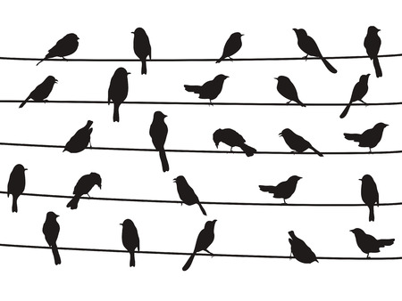 Illustration pour isolated silhouette of birds on wires from white background - image libre de droit