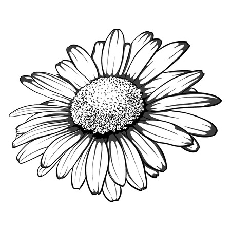 Illustration pour beautiful monochrome, black and white daisy flower isolated. for greeting cards and invitations of wedding, birthday, mother's day and other seasonal holiday - image libre de droit