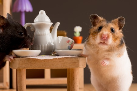 Photo for hamster drinking coffee - Royalty Free Image