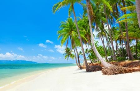 Photo pour tropical beach with coconut palm trees. Koh Samui, Thailand - image libre de droit