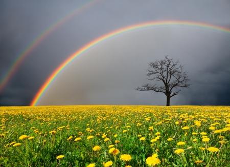 Foto de dandelion field and dead tree under cloudy sky with rainbow - Imagen libre de derechos