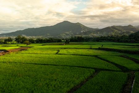 Photo pour Green rice plantation in Nan province, Northern Thailand - image libre de droit