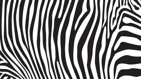 Ilustración de Zebra stripes pattern, illustration - Imagen libre de derechos