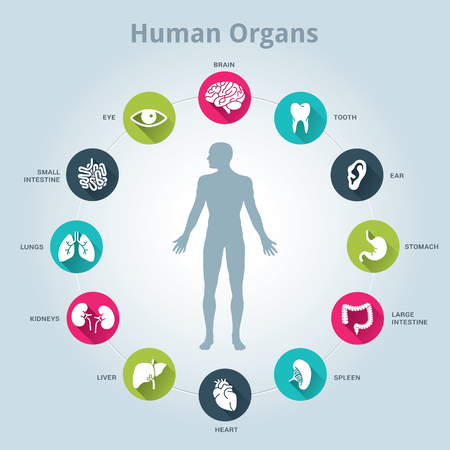 Illustrazione per Medical human organs icon set with body in the middle - Immagini Royalty Free