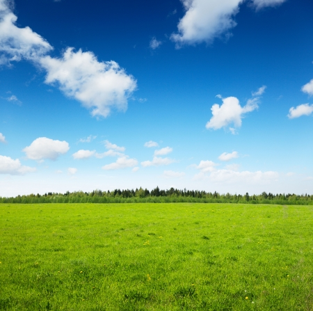 Photo pour spring field and sky - image libre de droit