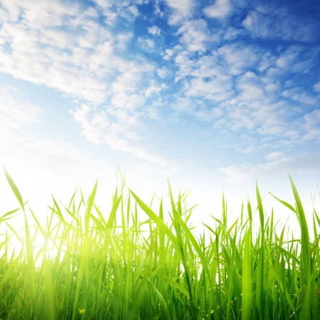 Photo pour grass and cloudy sky - image libre de droit