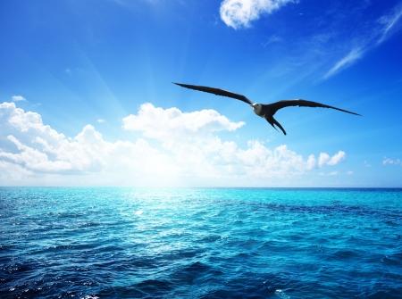 Foto de albatross and caribbean sea - Imagen libre de derechos